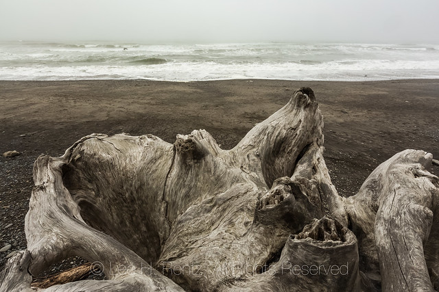 Driftwood Stumps on Rialto Beach in Olympic National Park