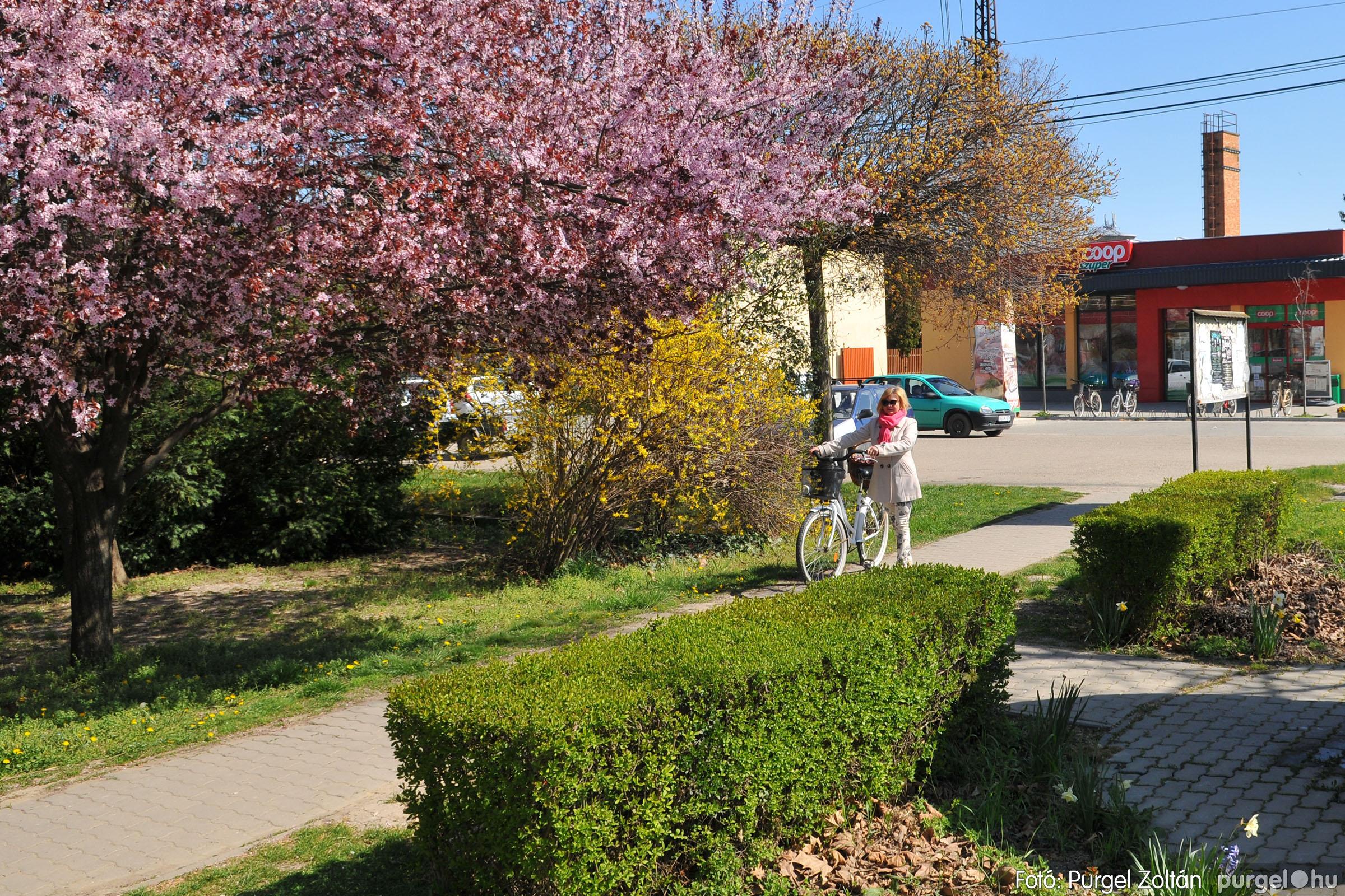 2020.04.03. 014 Szegváron járt a tavasz - Fotó:PURGEL ZOLTÁN© D3K_6621q.jpg