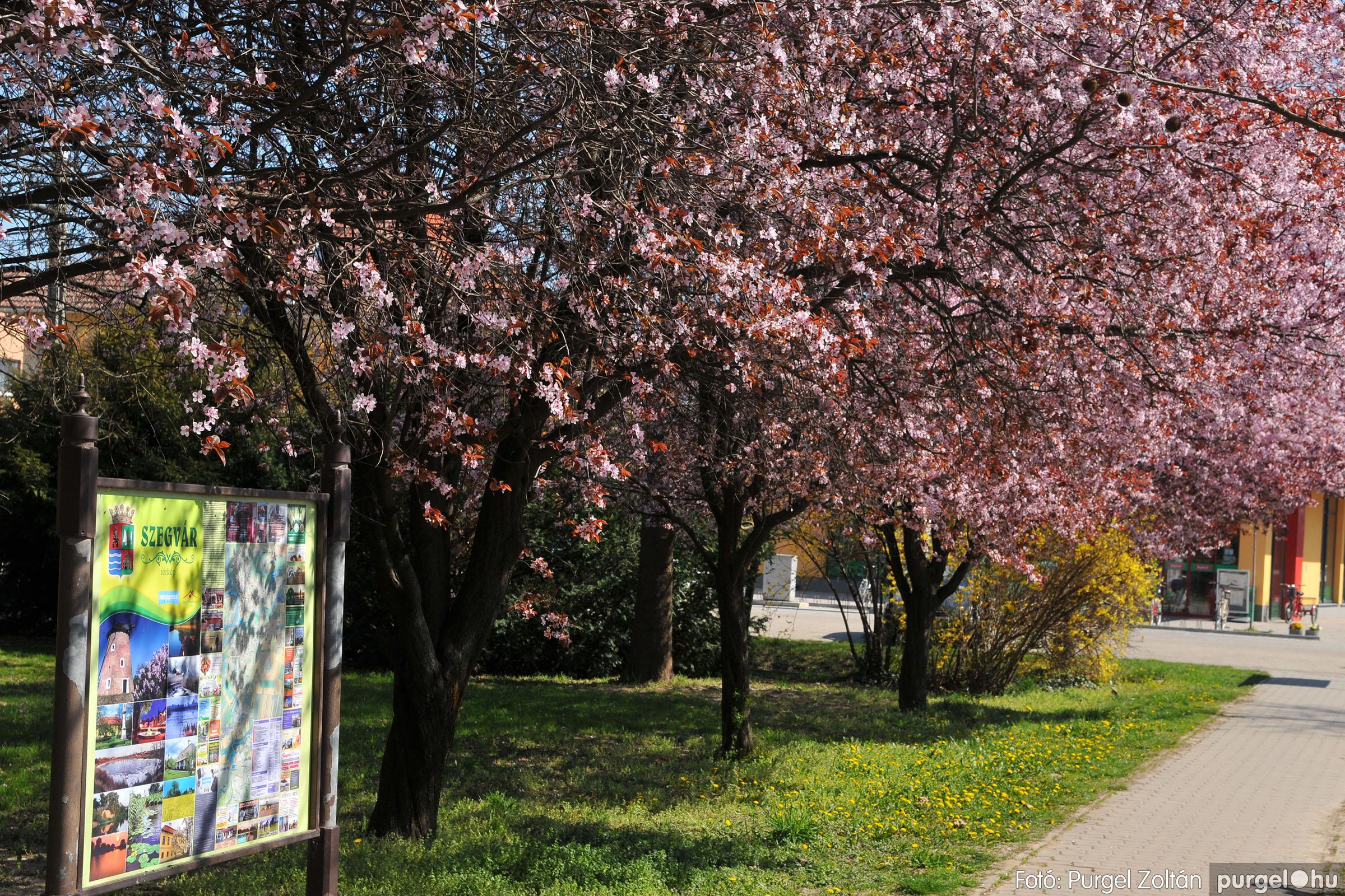 2020.04.03. 011 Szegváron járt a tavasz - Fotó:PURGEL ZOLTÁN© D3K_6616q.jpg