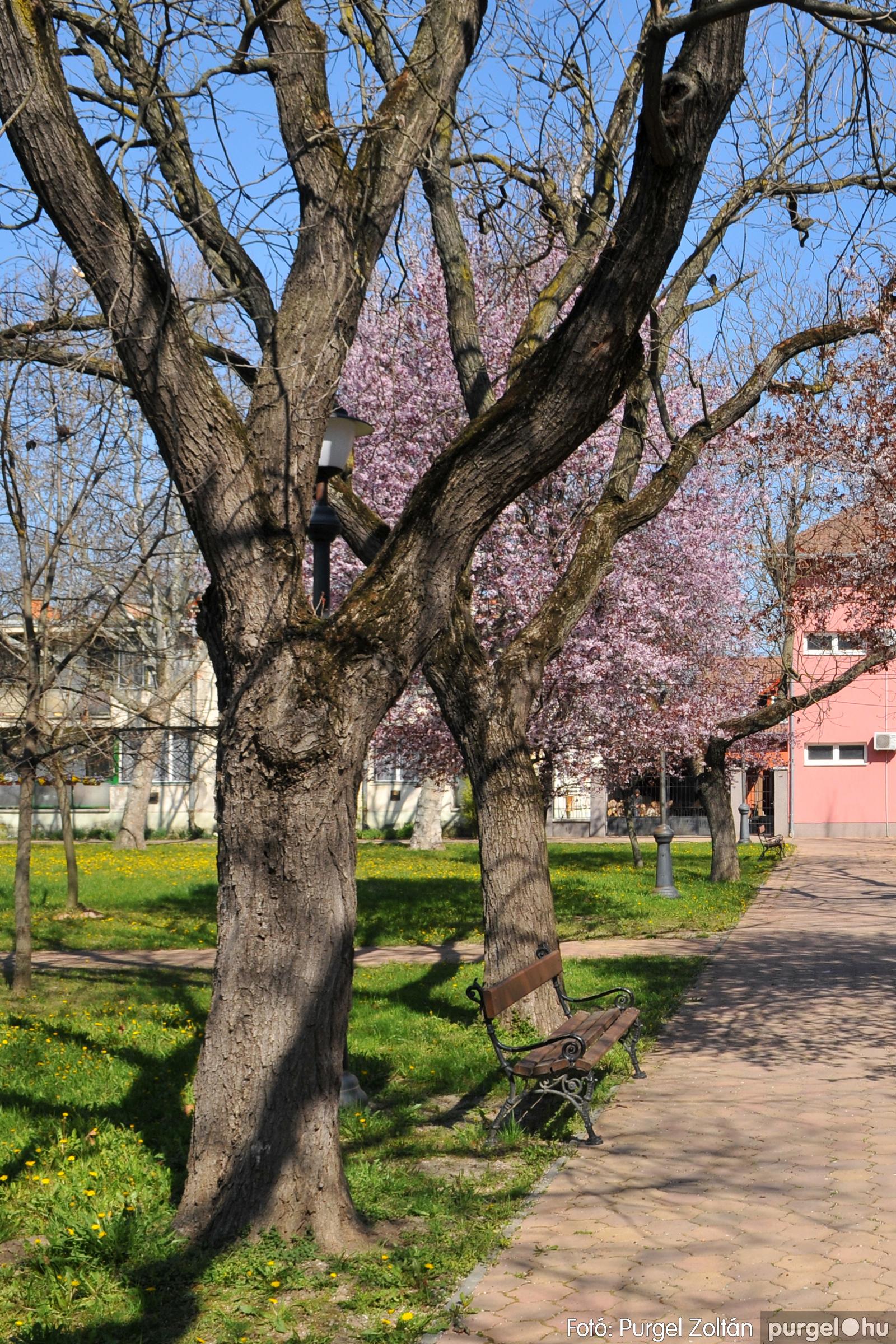 2020.04.03. 006 Szegváron járt a tavasz - Fotó:PURGEL ZOLTÁN© D3K_6607q.jpg
