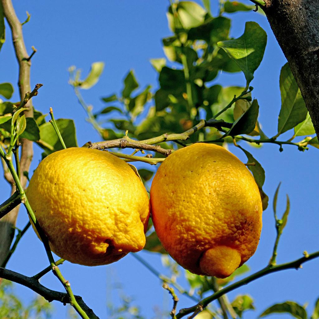 Limoni di Sorrento, Italia