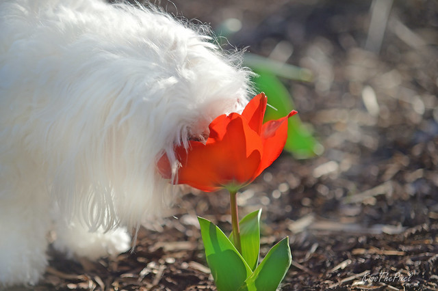 Can I play with this Tulip?...