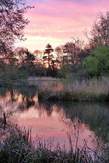 Pink sunrise (06.04.20)