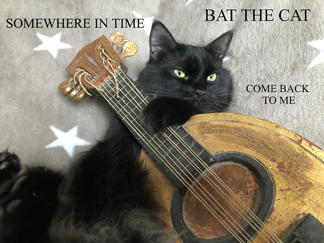 SOMEWHERE IN TIME ~ BAT THE CAT