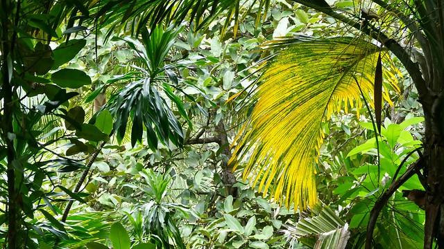 Seychelles ...