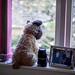 This bear's lived through many pandemics Sun 5 Apr 20:...