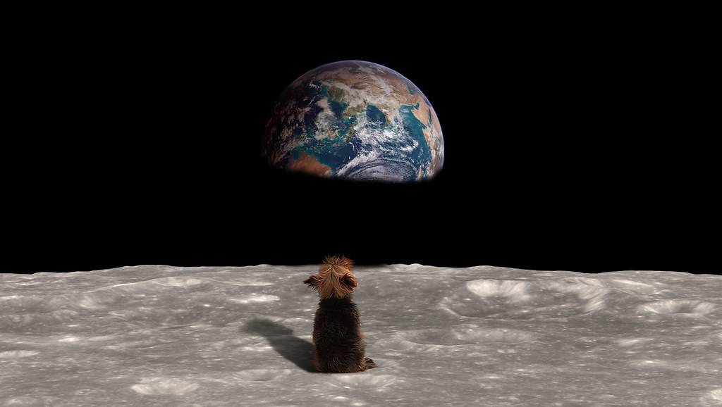 Dog on the moon staring at Earth