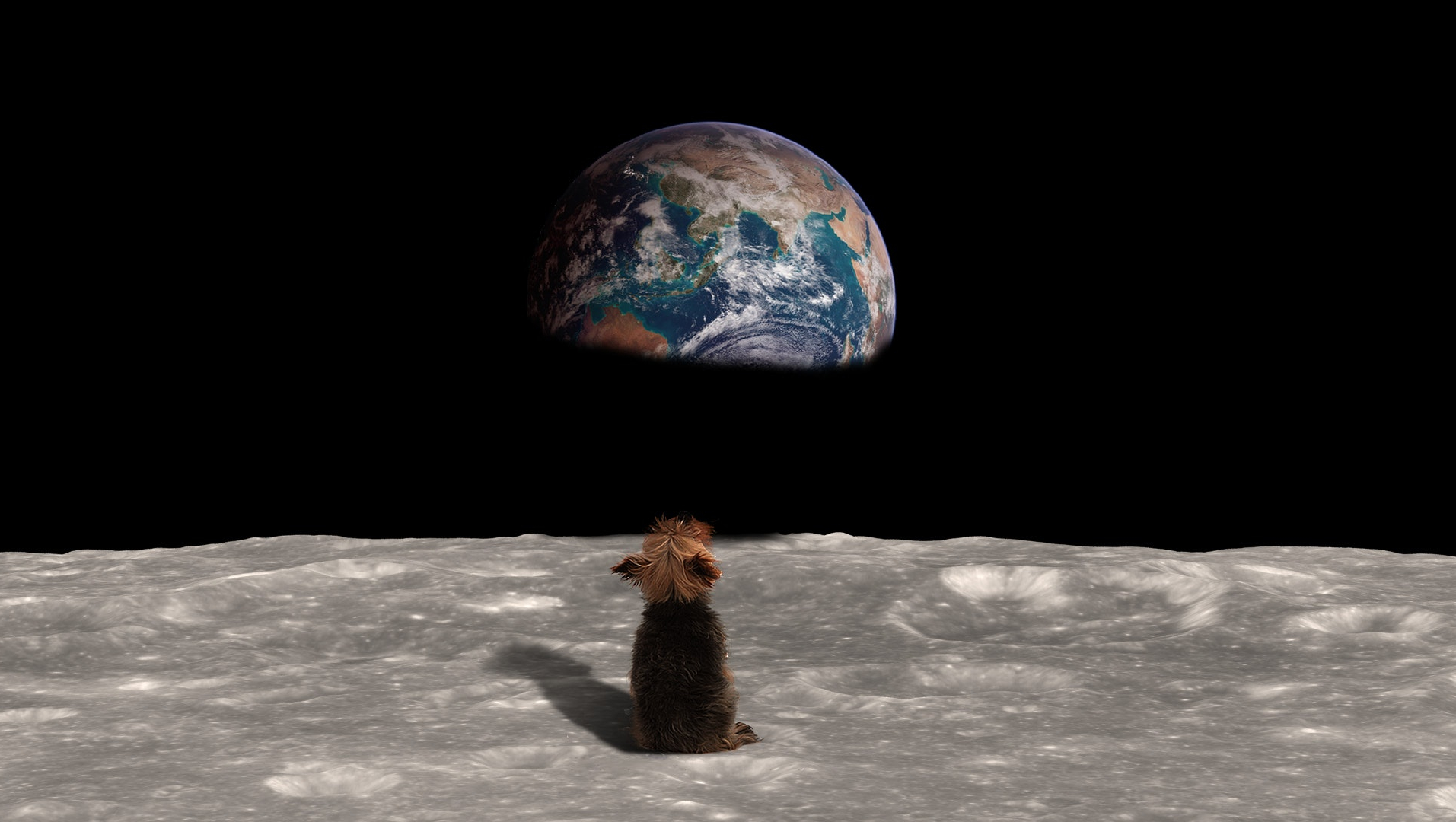 Dog looking at world