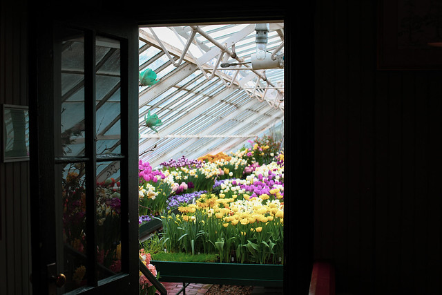 2020 Flower Show