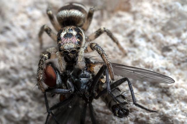 Fly Smoothie, Pt. 3 - _TNY_8499