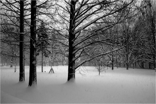 雪の日の公園