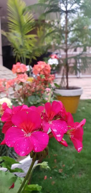 rain on flowers - 1