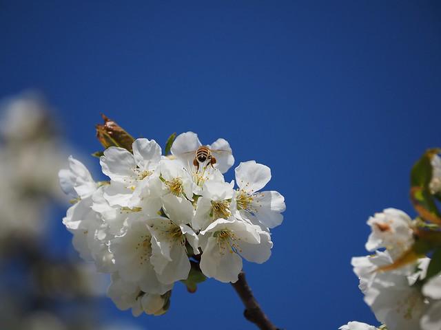 pomlad2020_05