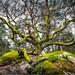 "<p><a href=""https://www.flickr.com/people/100178647@N03/"">kalzennyg</a> posted a photo:</p>  <p><a href=""https://www.flickr.com/photos/100178647@N03/49743838461/"" title=""on se souvient  des balades en forêt...""><img src=""https://live.staticflickr.com/65535/49743838461_fc4b94612f_m.jpg"" width=""240"" height=""159"" alt=""on se souvient  des balades en forêt..."" /></a></p>"