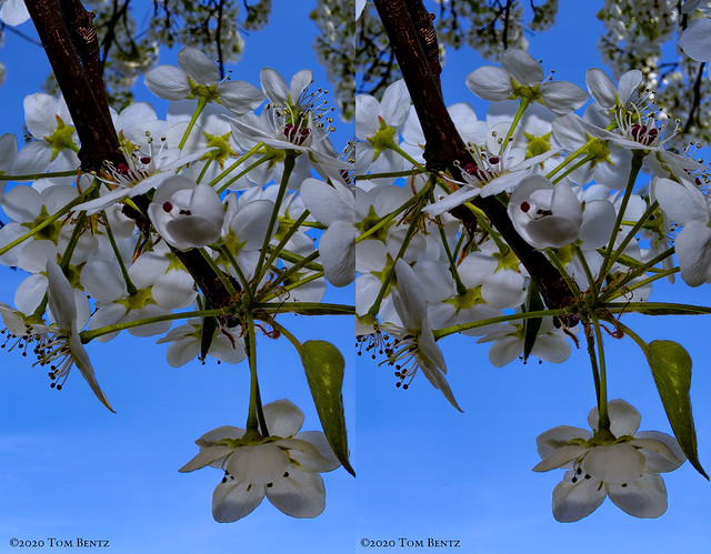 Buds & Blossoms 6 (Stereo)