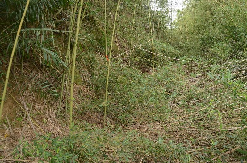 石樁臼(三百六坑山)荒廢土產道 2
