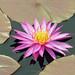 "<p><a href=""https://www.flickr.com/people/129851305@N04/"">Framemaker 2014</a> posted a photo:</p>  <p><a href=""https://www.flickr.com/photos/129851305@N04/49744326592/"" title=""Longwood Gardens Spring 2019 (172)""><img src=""https://live.staticflickr.com/65535/49744326592_c2b99a89da_m.jpg"" width=""160"" height=""240"" alt=""Longwood Gardens Spring 2019 (172)"" /></a></p>"