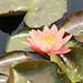 "<p><a href=""https://www.flickr.com/people/129851305@N04/"">Framemaker 2014</a> posted a photo:</p>  <p><a href=""https://www.flickr.com/photos/129851305@N04/49744326997/"" title=""Longwood Gardens Spring 2019 (171)""><img src=""https://live.staticflickr.com/65535/49744326997_2622c5b96a_m.jpg"" width=""160"" height=""240"" alt=""Longwood Gardens Spring 2019 (171)"" /></a></p>"