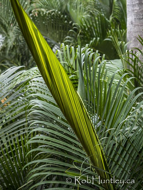 Palm Frond Development