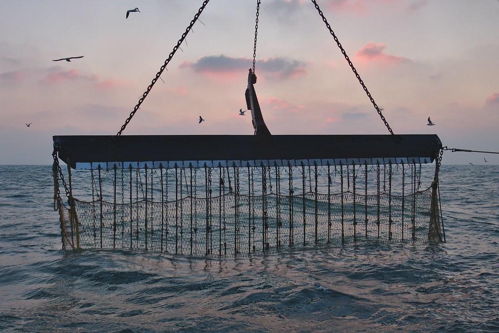 北海上的漁船正以通電底拖(pulse trawling)捕魚,是一種破壞生態的漁法。圖片來源:Delphinidaesy(CC BY-NC 2.0)