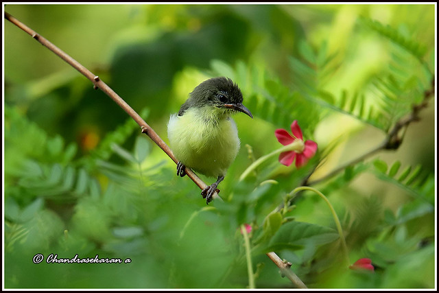 9795 - sunbird