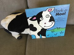 Peek-a-moo cow bookface
