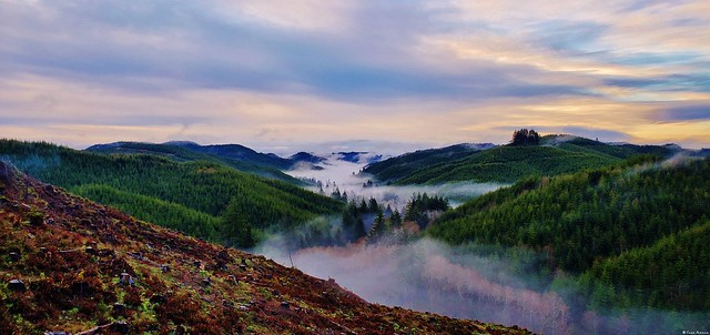 Morning Fog Rising From a Creek in the Valley Below