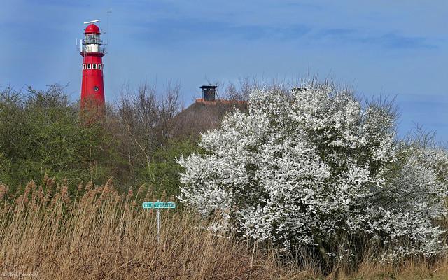 Schiermonnikoog: Westerduinenpad en vuurtoren