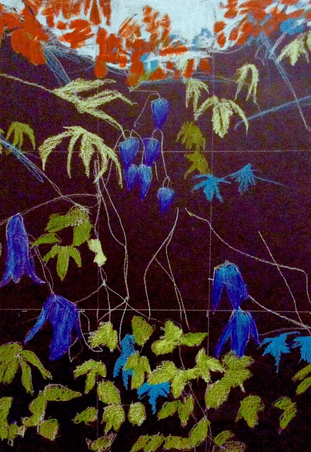 Clematis and others. Stage 1 of 3. Coloured pencil drawing on black card by jmsw.