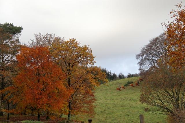 remember autumn