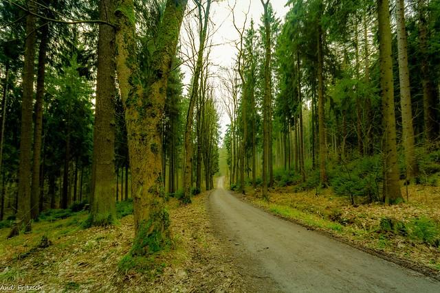 Der Bornwaldweg