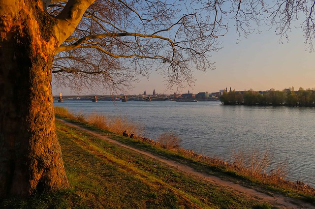 Spring evening at Rhine