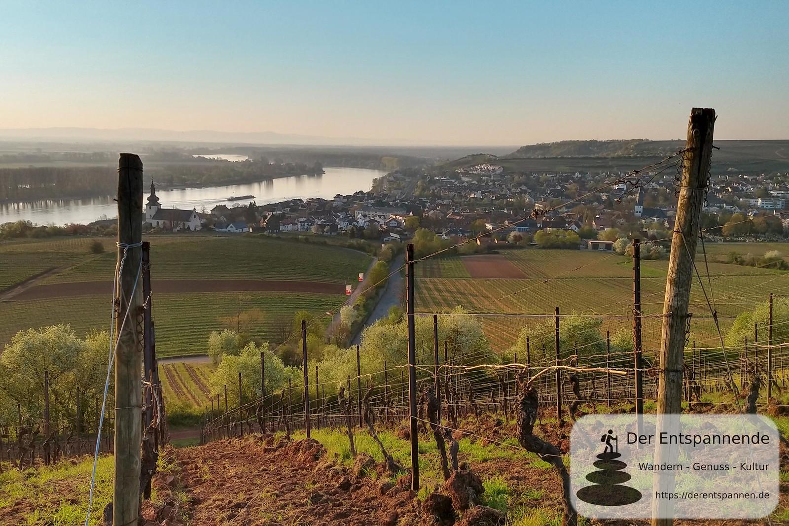 Am Roten Hang, Blick auf Rhein und Nierstein