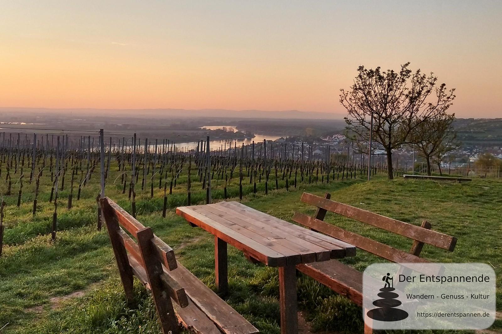 Am Niersteiner Wartturm, Blick auf Rhein und Nierstein