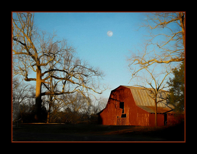 Georgia Barn-Spooky Tree