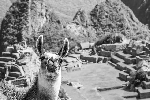 Machu Picchu, Blanco y Negro
