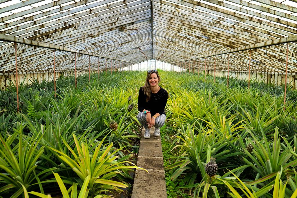 Visita del interior de unos de los invernaderos de plantación de piñas en Azores