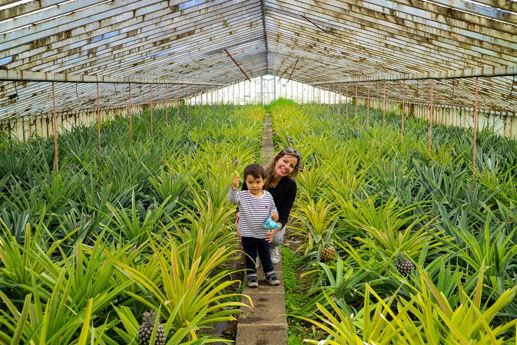 Interior de un de los invernaderos de la plantación Ananas dos Açores en Sao Miguel