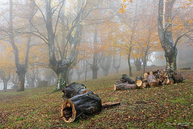 Nieblas de otoño 2