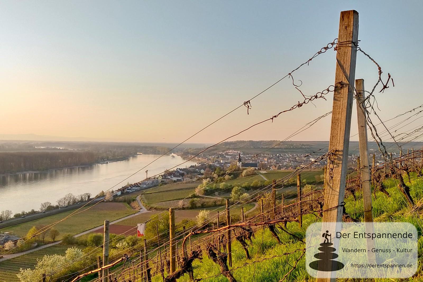 Sonnenaufgang am Roten Hang, Blick auf Rhein und Nierstein