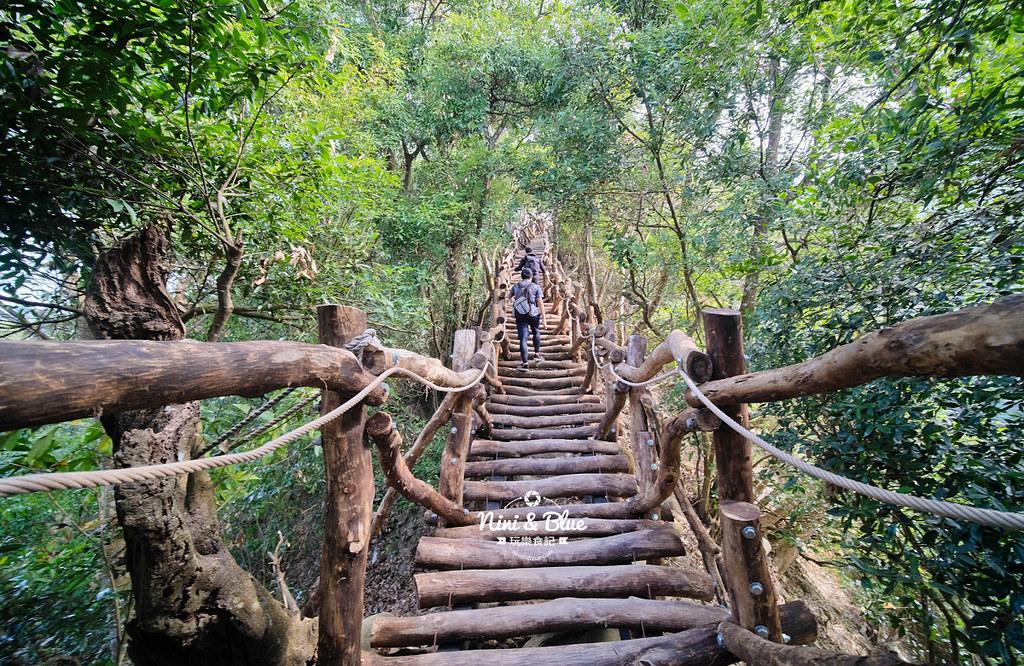 大坑2號步道 大坑登山步道14
