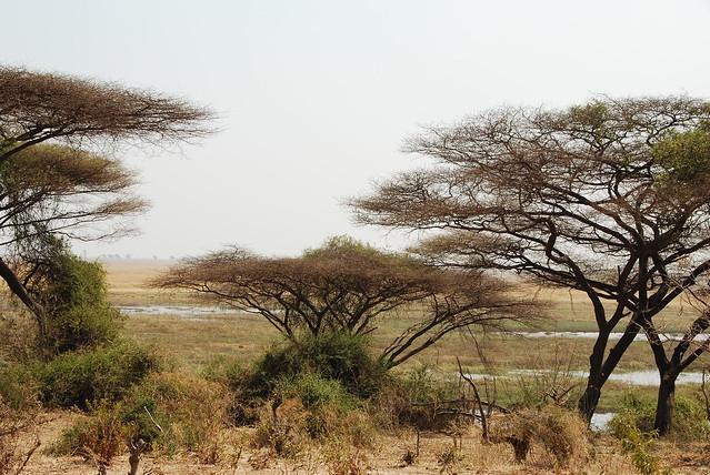 Verso Savuti-mopane