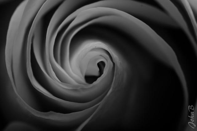 Rose Vertigo