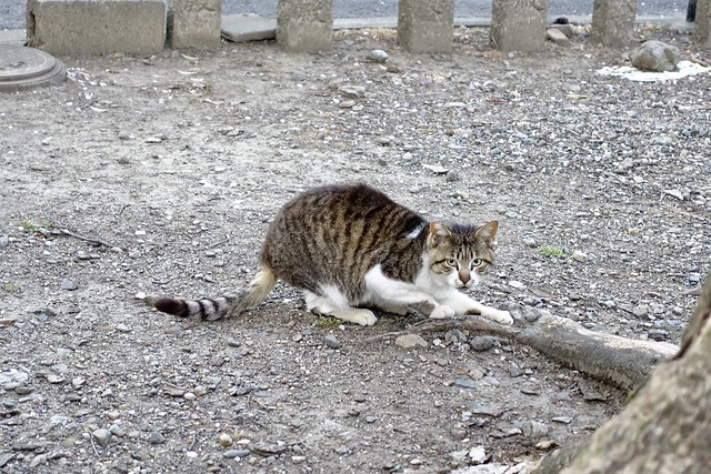 Today's Cat@2020ー04ー07