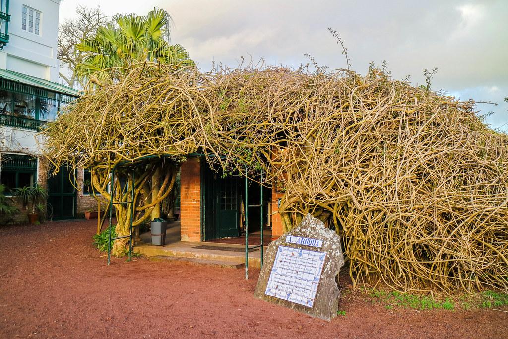 Tienda en la plantación de piñas Arruda en Ponta Delgada