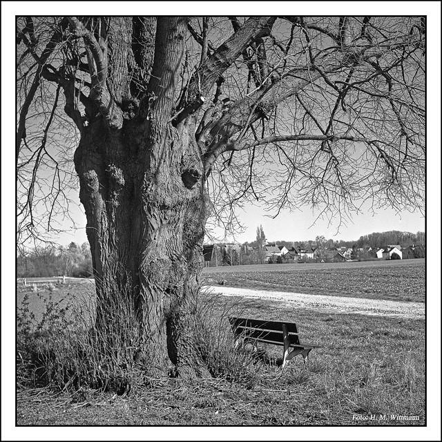 Linde mit Blick auf Spanbeck, Rolleiflex 3,5T