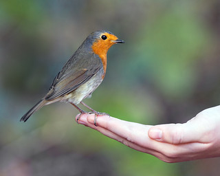 Giving Wildlife a helping hand.