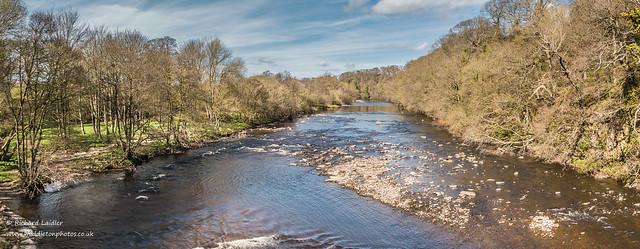 Tees Upstream from Whorlton Bridge Panorama Apr 2020