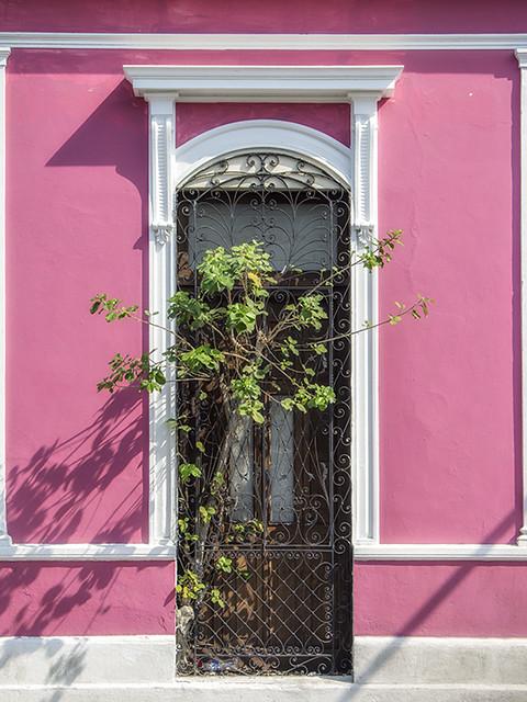Pink Wall