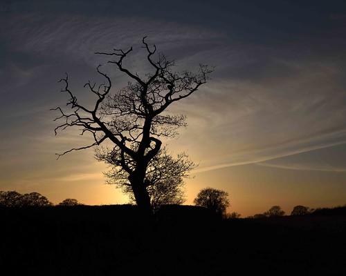 barrypotteredenmedia nikonflickrtrophy nikond750 nikkor24120mmf4 tree sunset